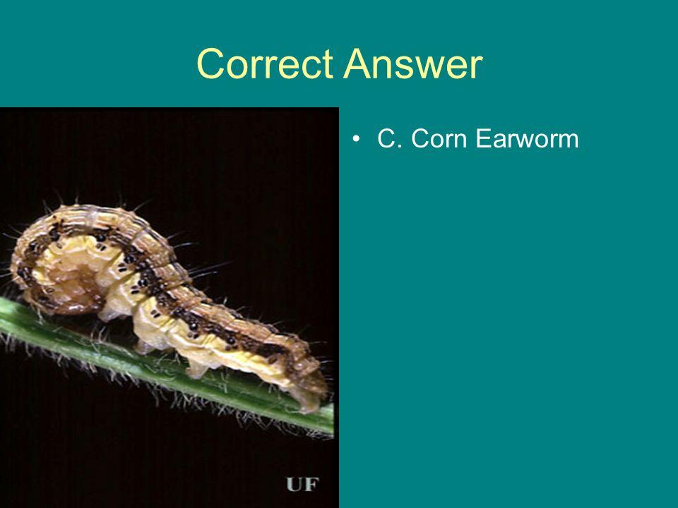 Correct Answer C. Corn Earworm