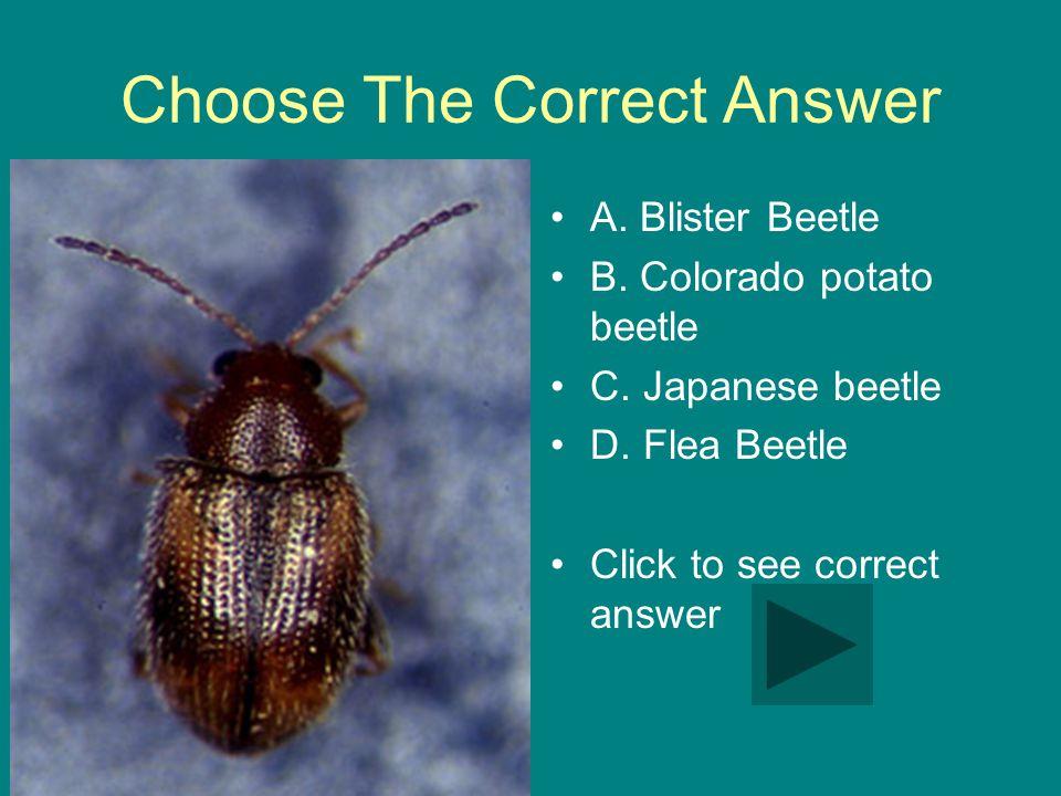 Choose The Correct Answer A. Blister Beetle B. Colorado potato beetle C.