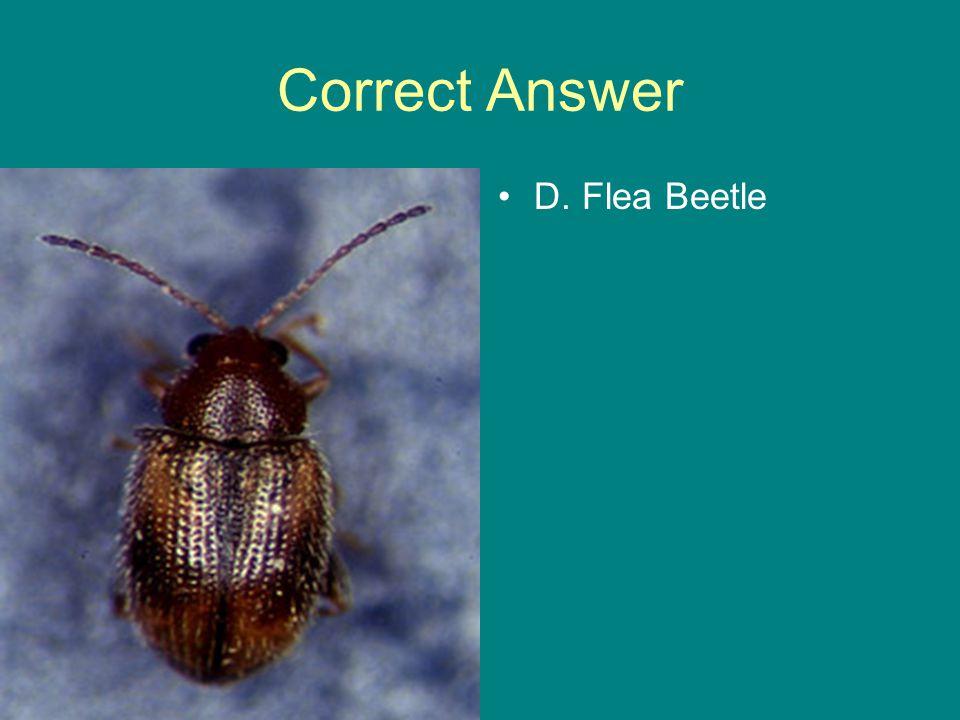 Correct Answer D. Flea Beetle