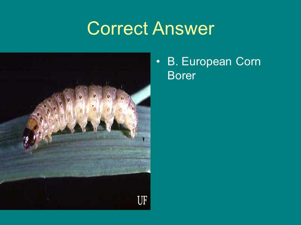 Correct Answer B. European Corn Borer
