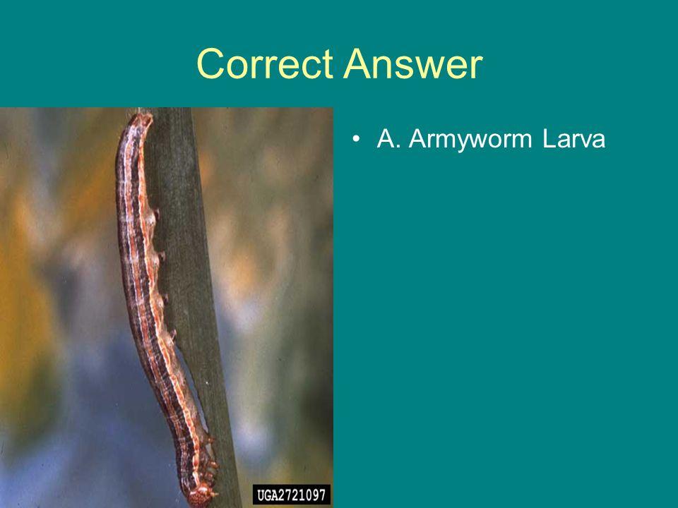 Correct Answer A. Armyworm Larva