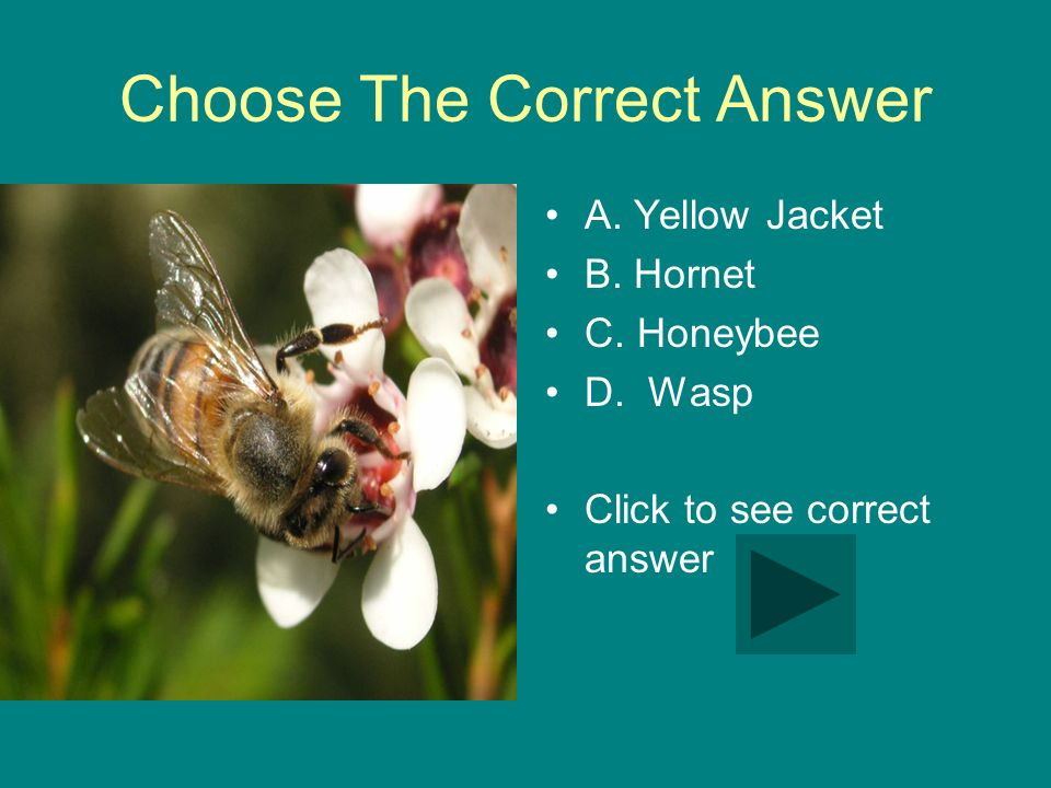 Choose The Correct Answer A. Yellow Jacket B. Hornet C.