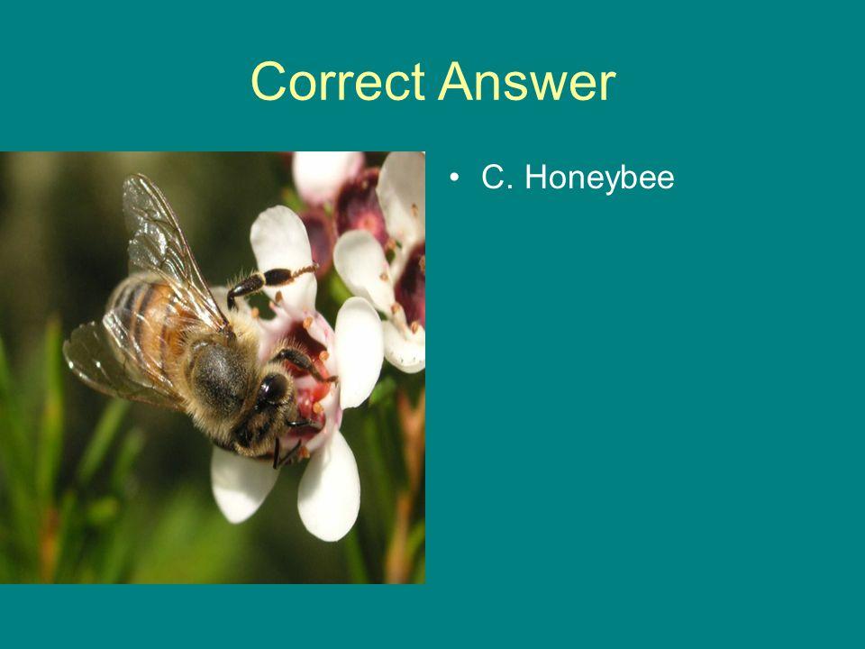 Correct Answer C. Honeybee