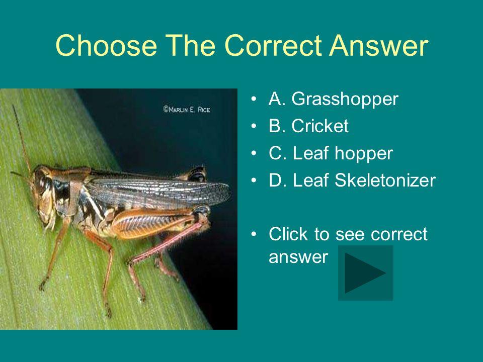 Choose The Correct Answer A. Grasshopper B. Cricket C.
