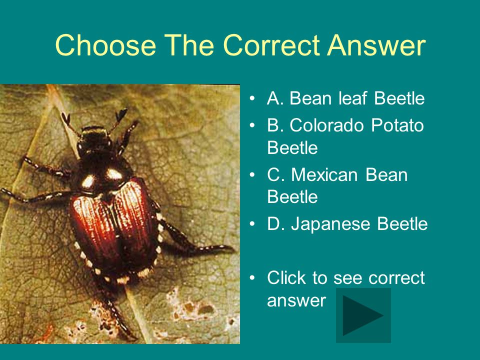 Choose The Correct Answer A. Bean leaf Beetle B. Colorado Potato Beetle C.