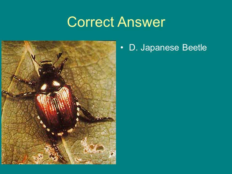 Correct Answer D. Japanese Beetle