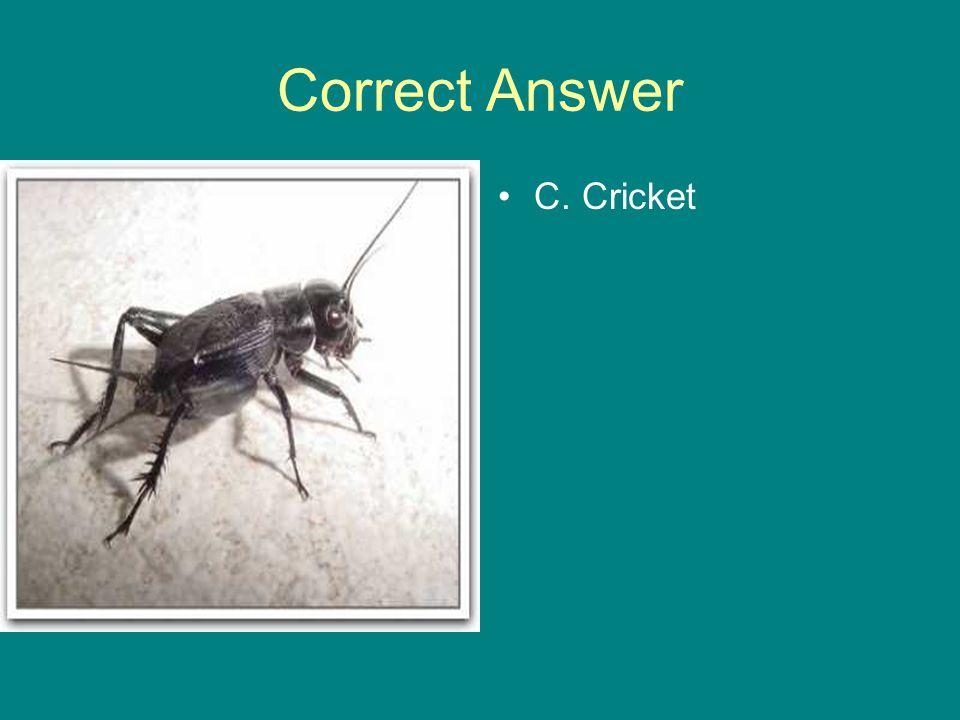 Correct Answer C. Cricket