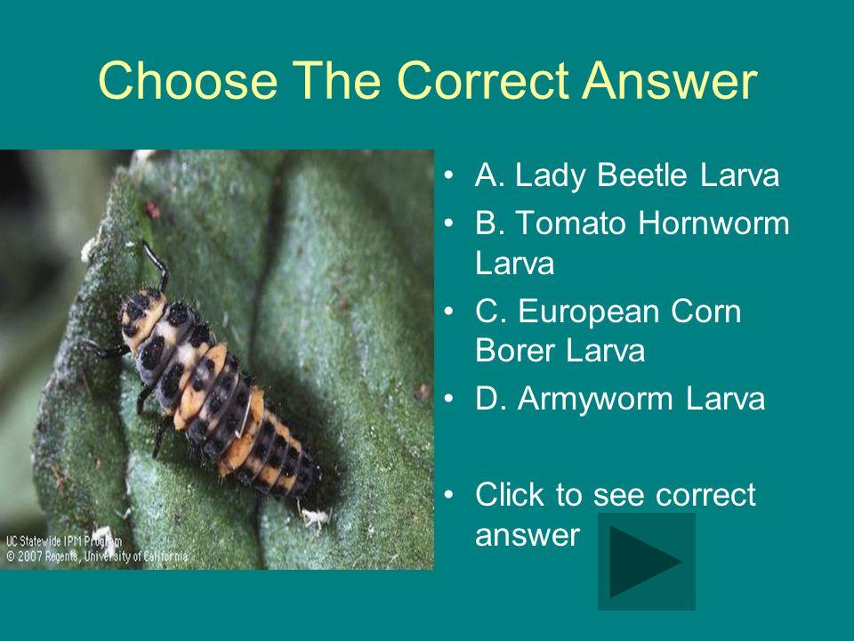 Choose The Correct Answer A. Lady Beetle Larva B.