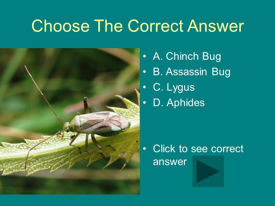 Choose The Correct Answer A. Chinch Bug B. Assassin Bug C.