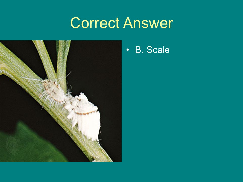 Correct Answer B. Scale