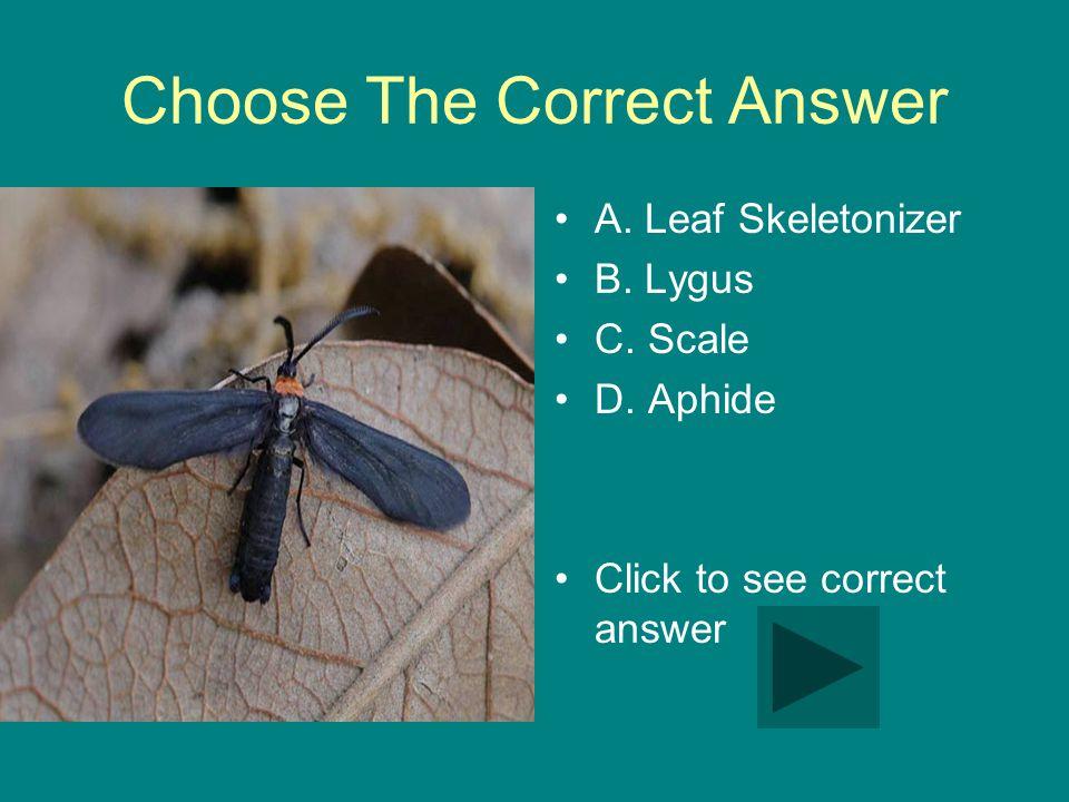 Choose The Correct Answer A. Leaf Skeletonizer B.