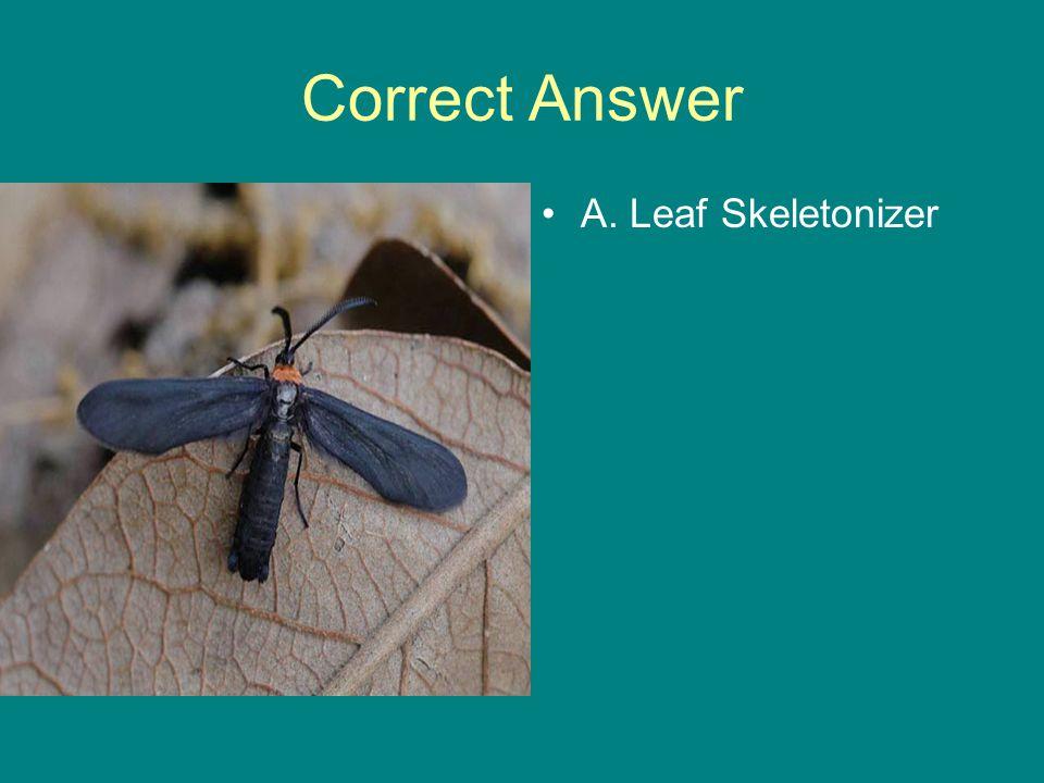 Correct Answer A. Leaf Skeletonizer