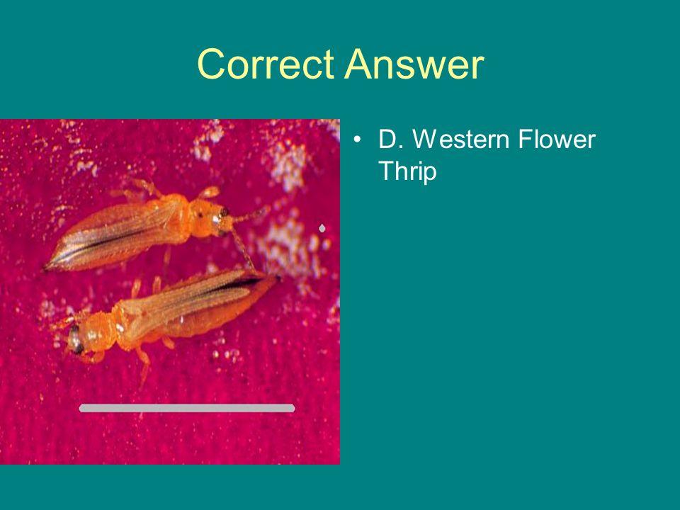 Correct Answer D. Western Flower Thrip