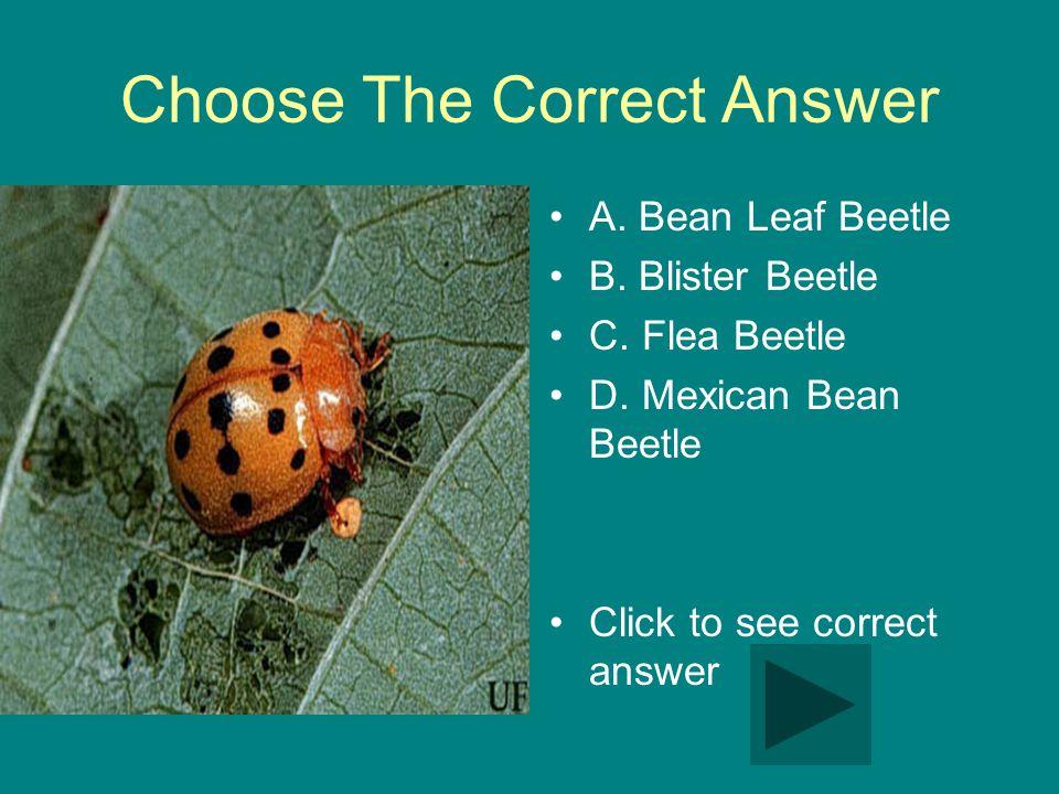 Choose The Correct Answer A. Bean Leaf Beetle B. Blister Beetle C.
