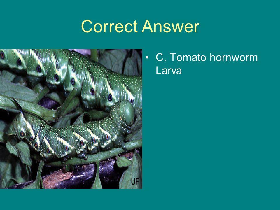 Correct Answer C. Tomato hornworm Larva