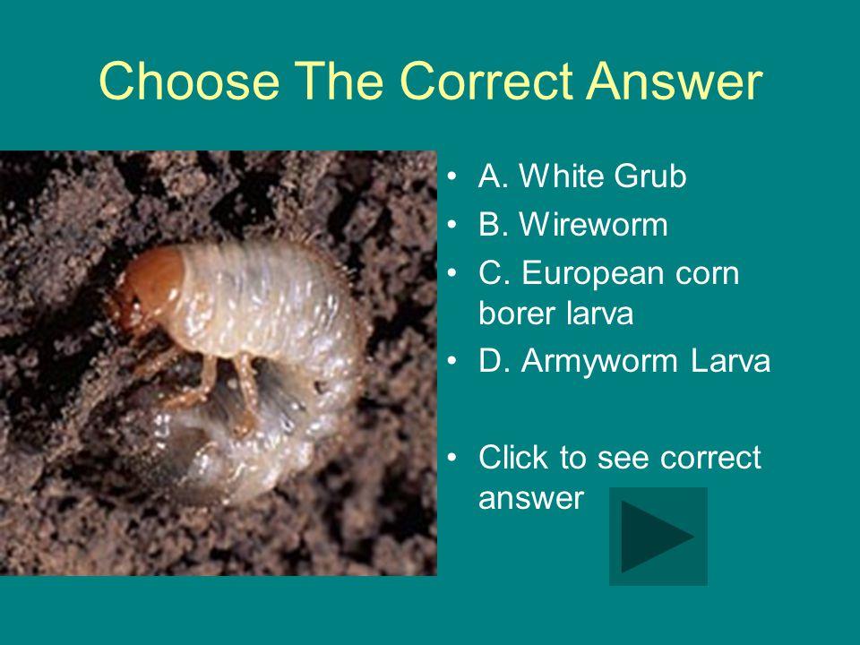 Choose The Correct Answer A. White Grub B. Wireworm C.