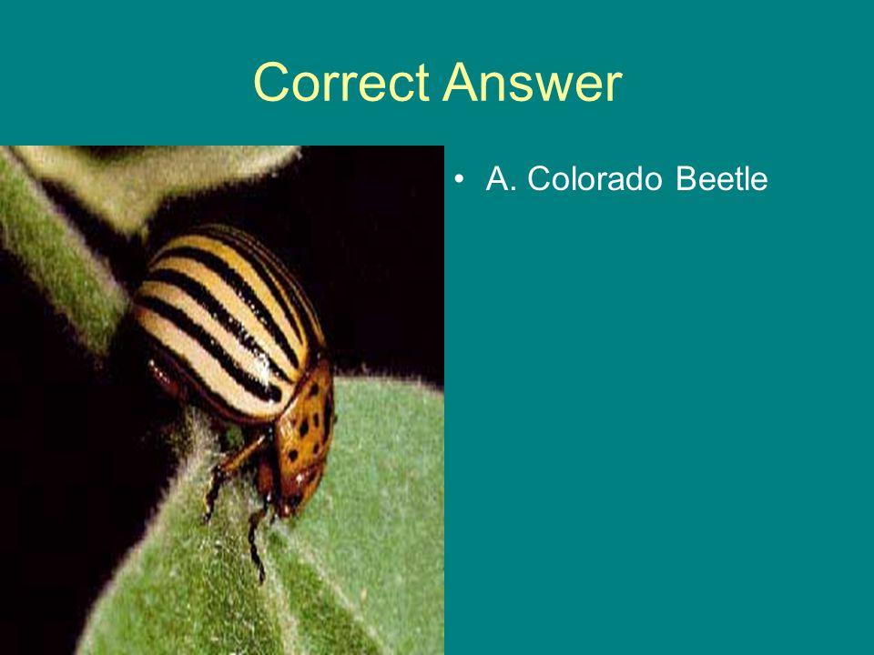 Correct Answer A. Colorado Beetle