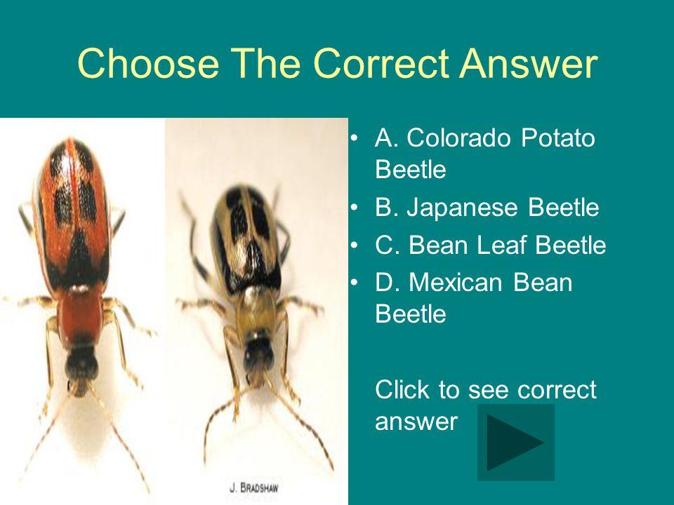Choose The Correct Answer A. Colorado Potato Beetle B.
