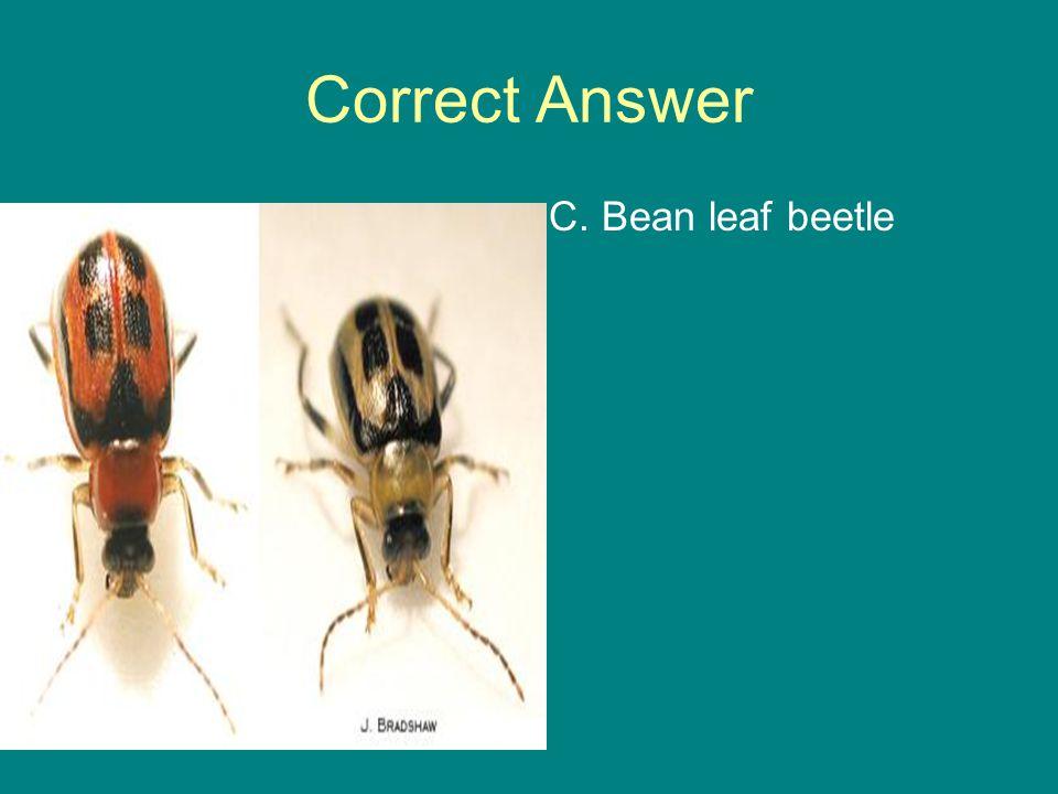 Correct Answer C. Bean leaf beetle