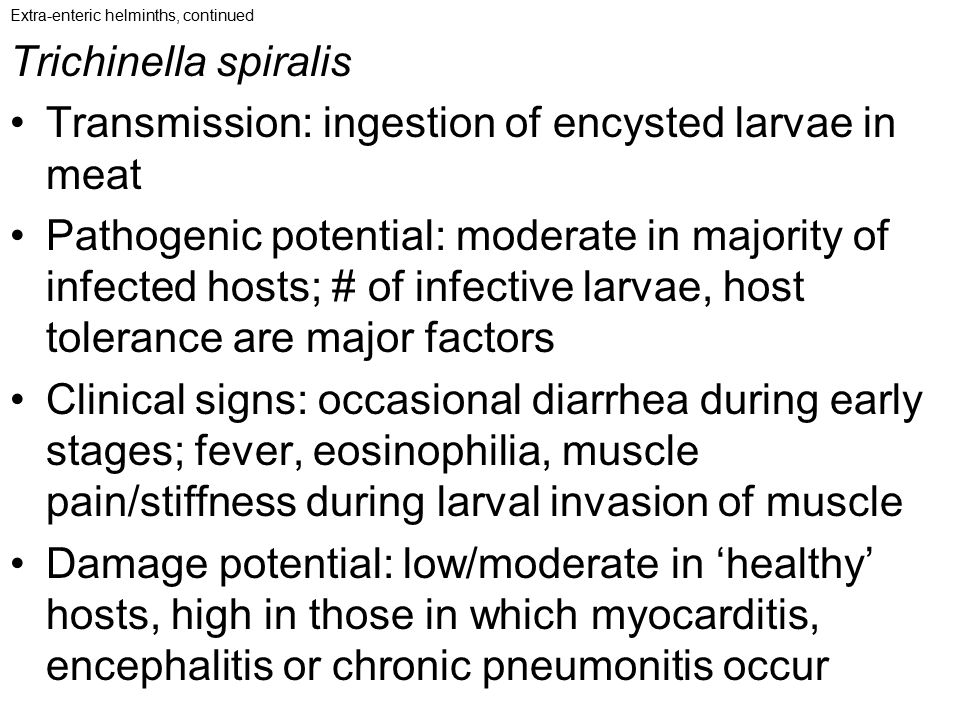 Extra-enteric helminths, continued Trichinella spiralis Transmission: ingestion of encysted larvae in meat Pathogenic potential: moderate in majority