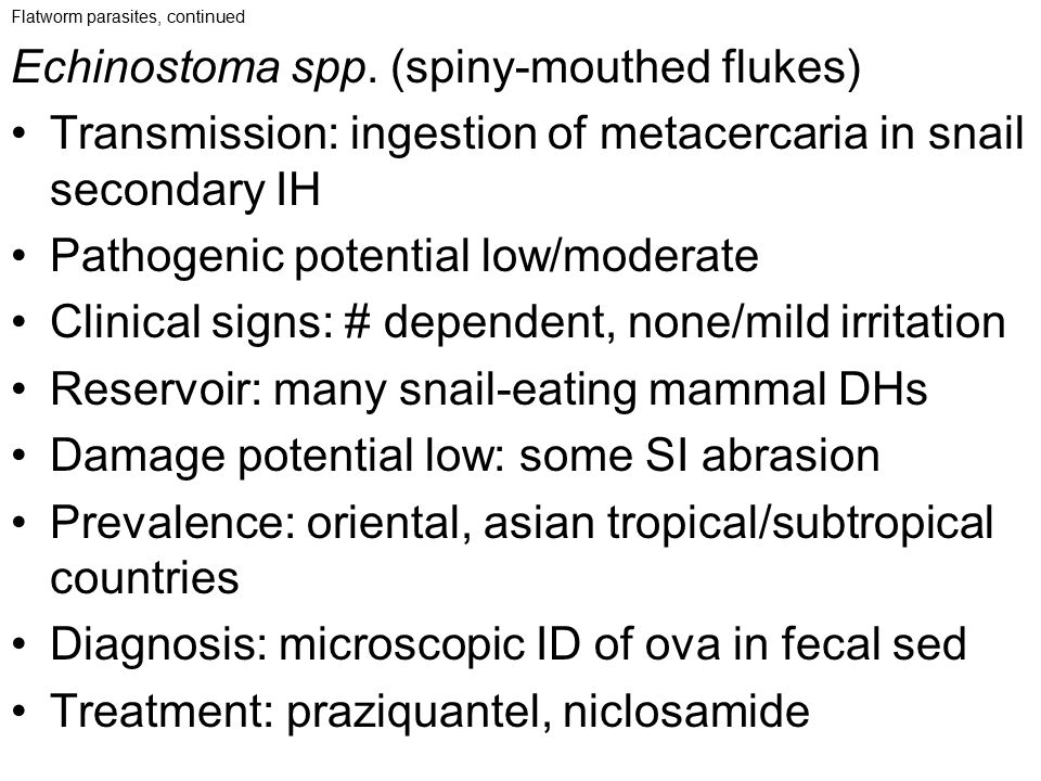 Flatworm parasites, continued Echinostoma spp. (spiny-mouthed flukes) Transmission: ingestion of metacercaria in snail secondary IH Pathogenic potenti