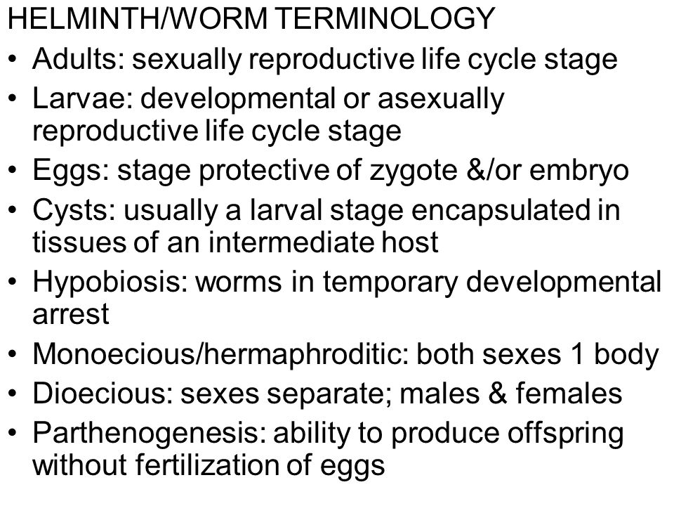 HELMINTH/WORM TERMINOLOGY Adults: sexually reproductive life cycle stage Larvae: developmental or asexually reproductive life cycle stage Eggs: stage