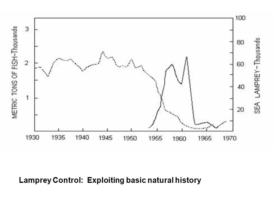 Lamprey Control: Exploiting basic natural history