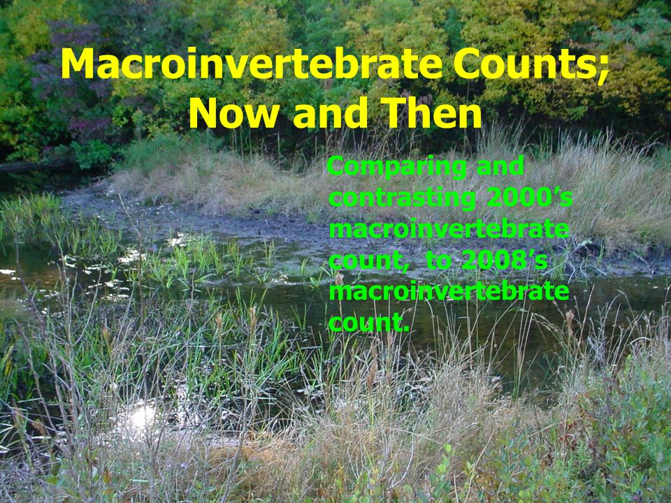Macroinvertebrates Group1- Sensitive organisms, Includes pollution- sensitive organisms such as mayfly, stonefly, and caddisfly larva, which are typically found in good quality water.