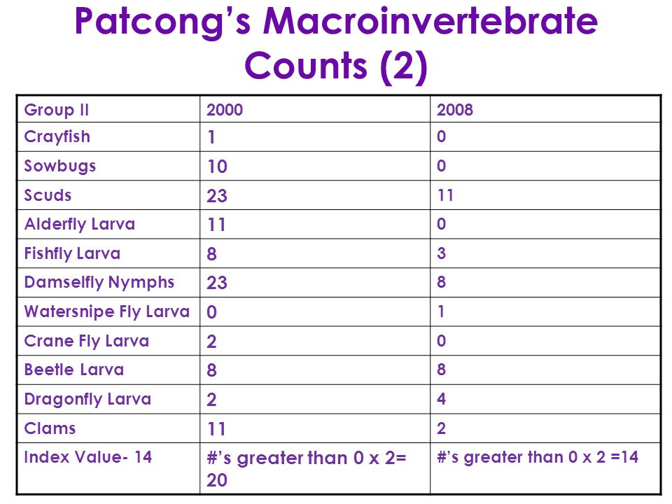 Patcong's Macroinvertebrate Counts (2) Group II20002008 Crayfish 1 0 Sowbugs 10 0 Scuds 23 11 Alderfly Larva 11 0 Fishfly Larva 8 3 Damselfly Nymphs 23 8 Watersnipe Fly Larva 0 1 Crane Fly Larva 2 0 Beetle Larva 8 8 Dragonfly Larva 2 4 Clams 11 2 Index Value- 14 #'s greater than 0 x 2= 20 #'s greater than 0 x 2 =14