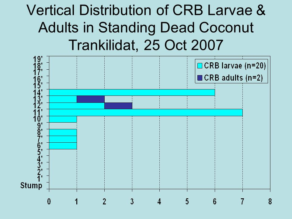 Vertical Distribution of CRB Larvae & Adults in Standing Dead Coconut Trankilidat, 25 Oct 2007