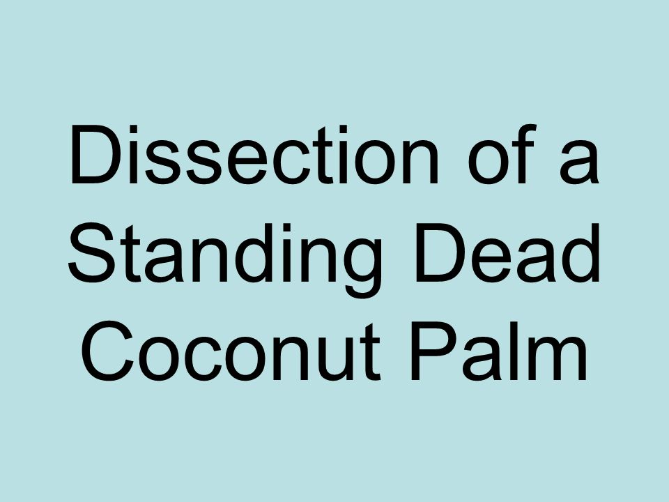 Dissection of a Standing Dead Coconut Palm