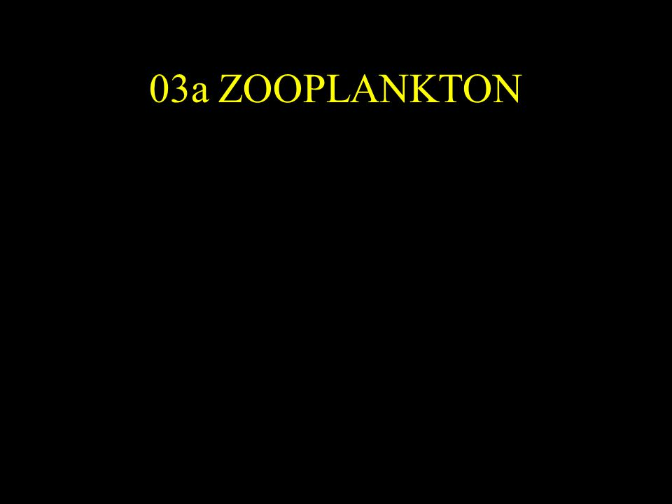 03a ZOOPLANKTON