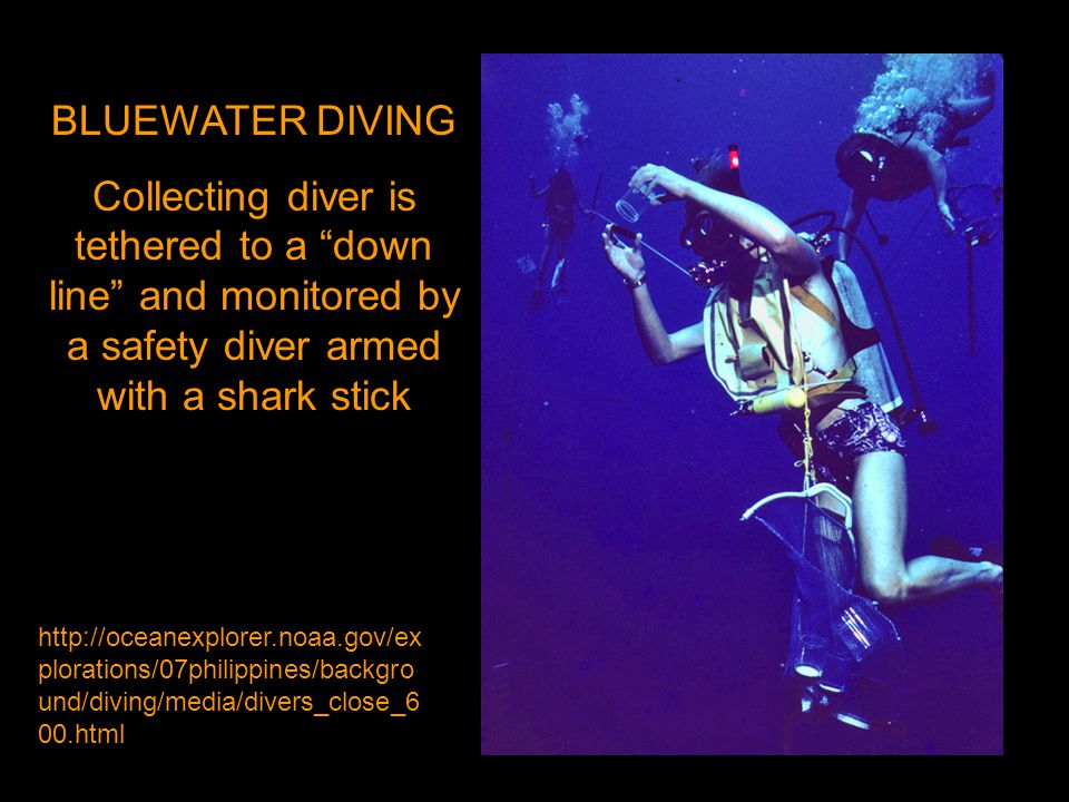 BLUEWATER DIVING Collecting diver is tethered to a down line and monitored by a safety diver armed with a shark stick http://oceanexplorer.noaa.gov/ex plorations/07philippines/backgro und/diving/media/divers_close_6 00.html
