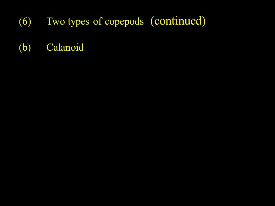 (6)Two types of copepods (continued) (b)Calanoid