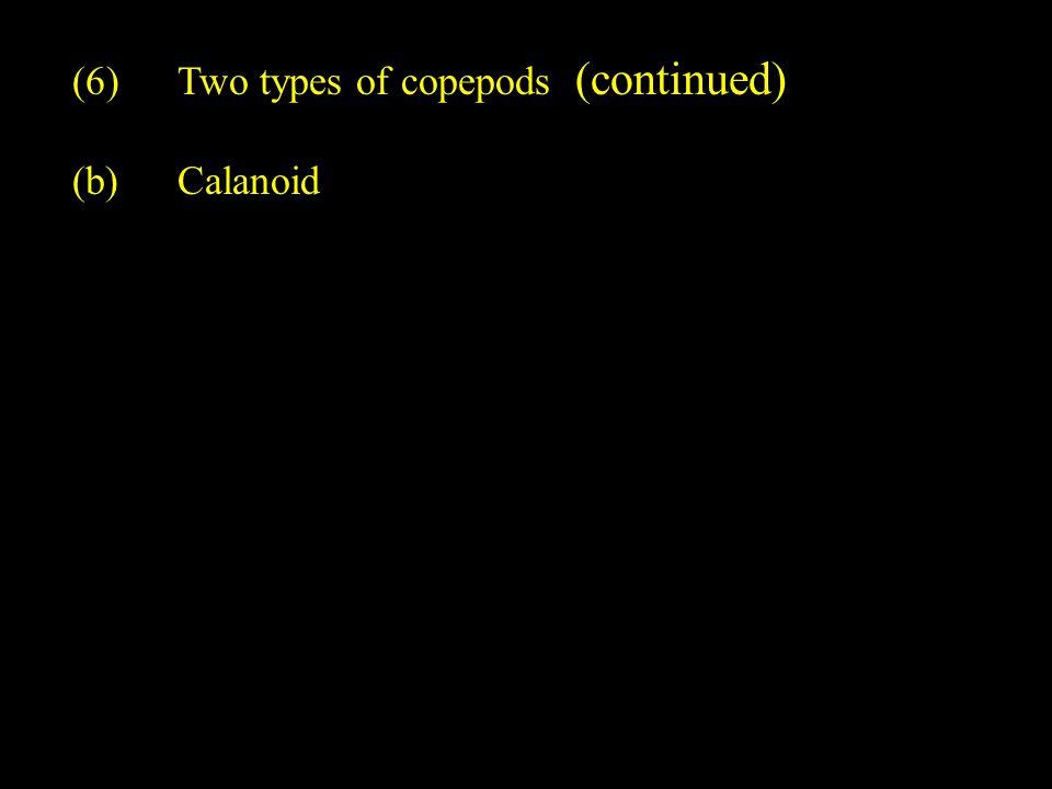 Group of Calanoid copepods (Calanus sp.) Purvis et al., 2001, Fig. 32.664