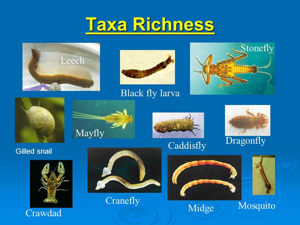 Taxa Richness Leech Black fly larva Midge Dragonfly Crawdad Cranefly Mosquito Caddisfly Mayfly Stonefly Gilled snail