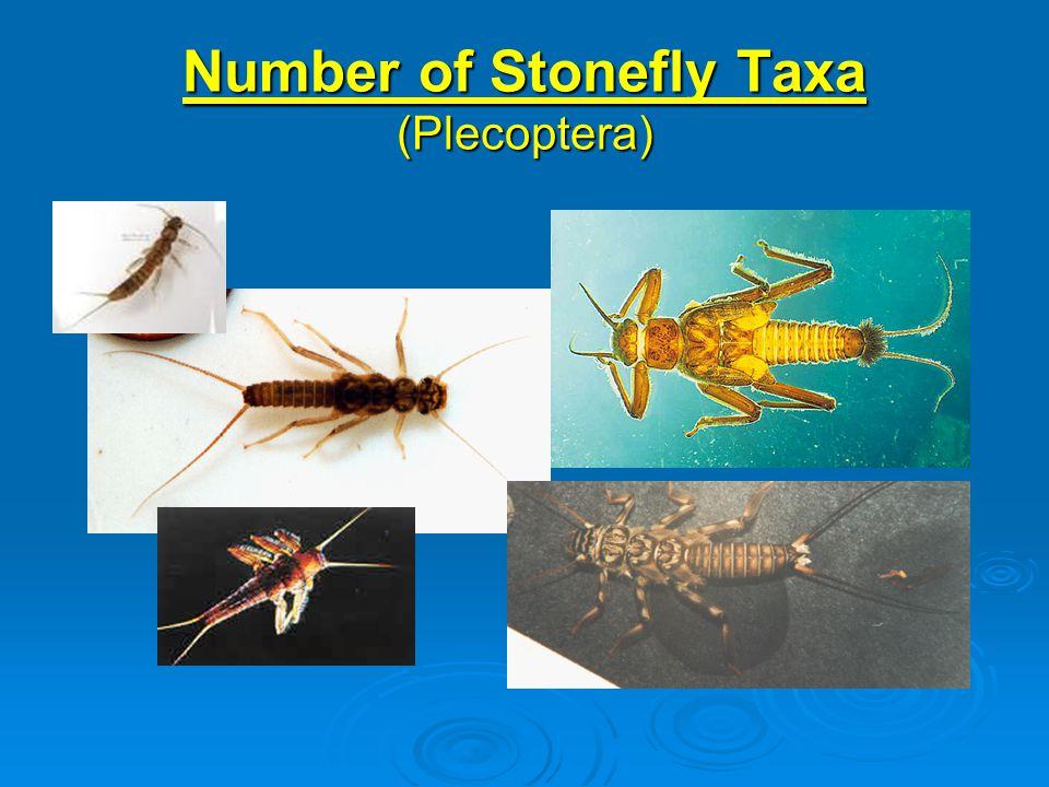 Number of Stonefly Taxa (Plecoptera)