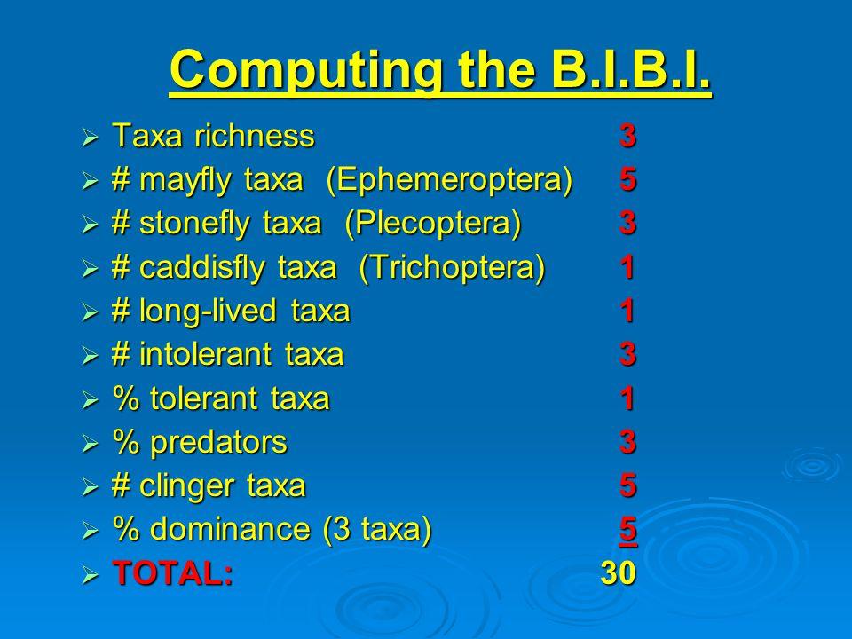 Computing the B.I.B.I.