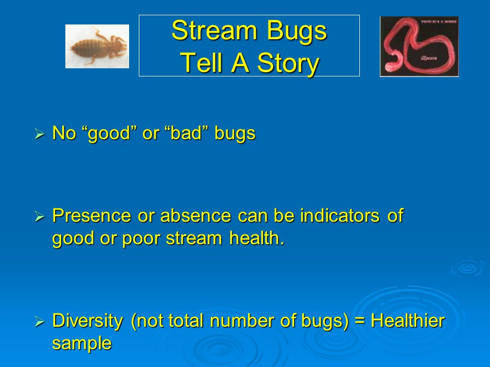 "Stream Bugs Tell A Story  No ""good"" or ""bad"" bugs  Presence or absence can be indicators of good or poor stream health.  Diversity (not total numbe"