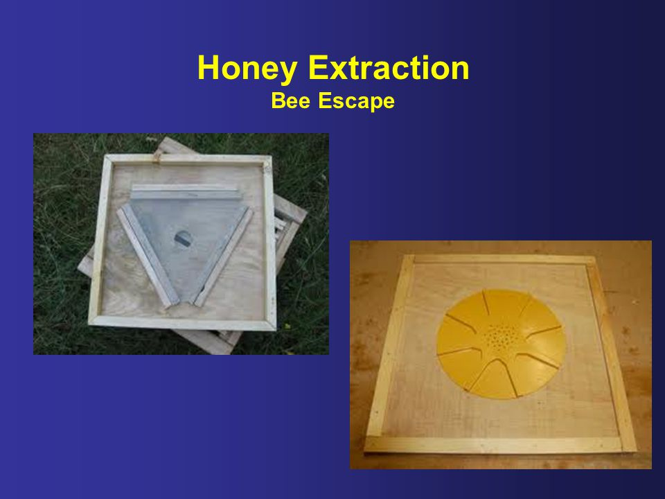 Honey Extraction Bee Escape