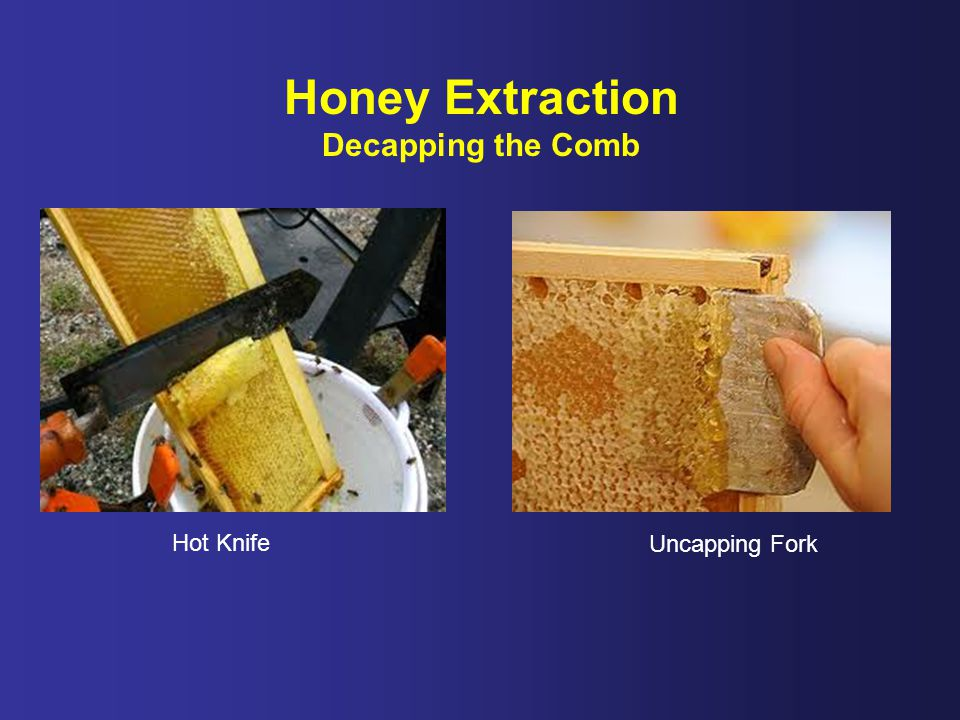 Honey Extraction Decapping the Comb Hot Knife Uncapping Fork