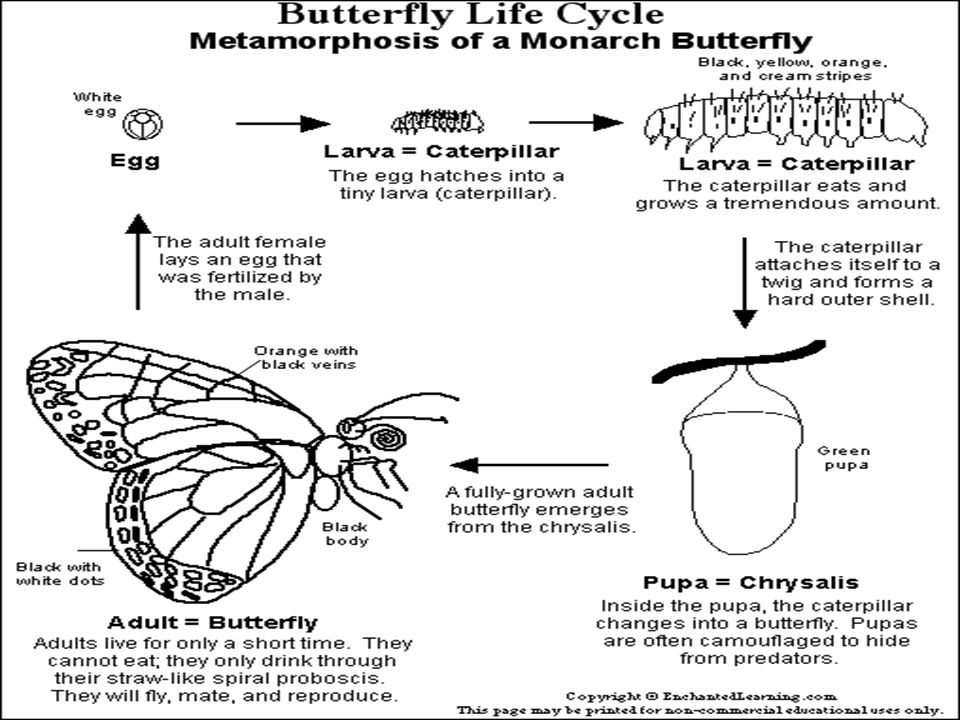 butterflies  ever wonder where a butterfly comes from it comes  3 butterflies
