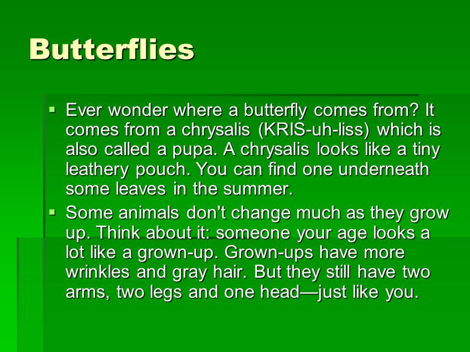 Butterflies  Ever wonder where a butterfly comes from? It comes from a chrysalis (KRIS-uh-liss) which is also called a pupa. A chrysalis looks like a