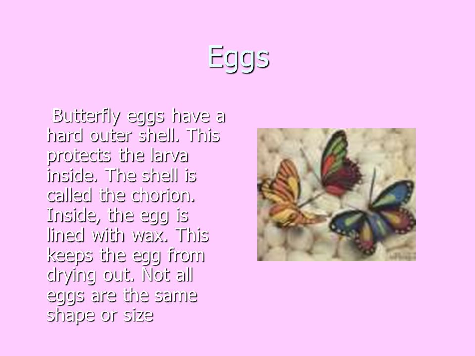Eggs Butterfly eggs have a hard outer shell. This protects the larva inside. The shell is called the chorion. Inside, the egg is lined with wax. This