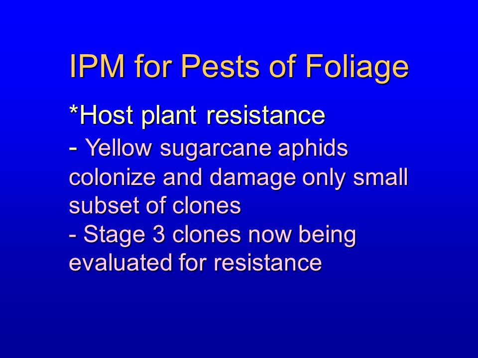 IPM for Pests of Foliage *Host plant resistance - Yellow sugarcane aphids colonize and damage only small subset of clones - Stage 3 clones now being e