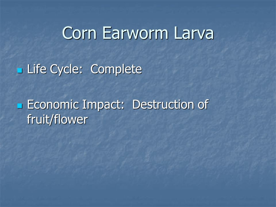 Life Cycle: Complete Life Cycle: Complete Economic Impact: Destruction of fruit/flower Economic Impact: Destruction of fruit/flower