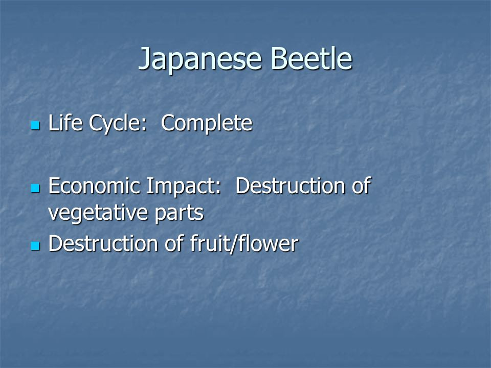 Life Cycle: Complete Life Cycle: Complete Economic Impact: Destruction of vegetative parts Economic Impact: Destruction of vegetative parts Destruction of fruit/flower Destruction of fruit/flower