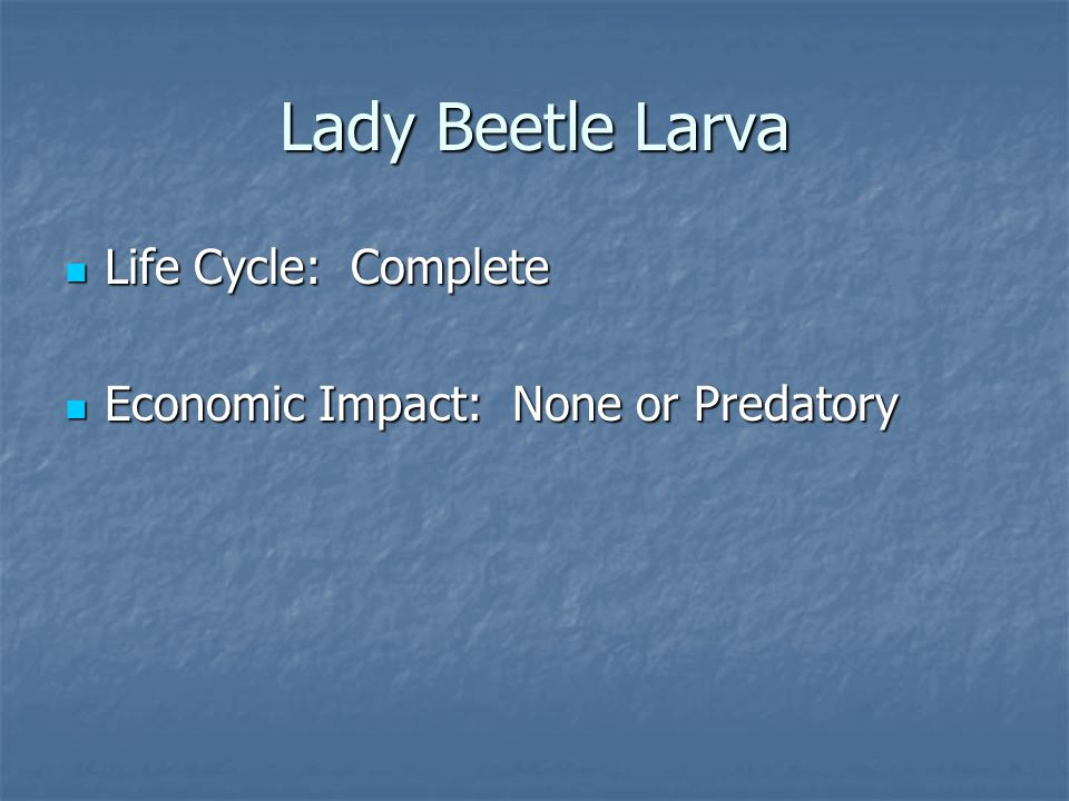 Life Cycle: Complete Life Cycle: Complete Economic Impact: None or Predatory Economic Impact: None or Predatory