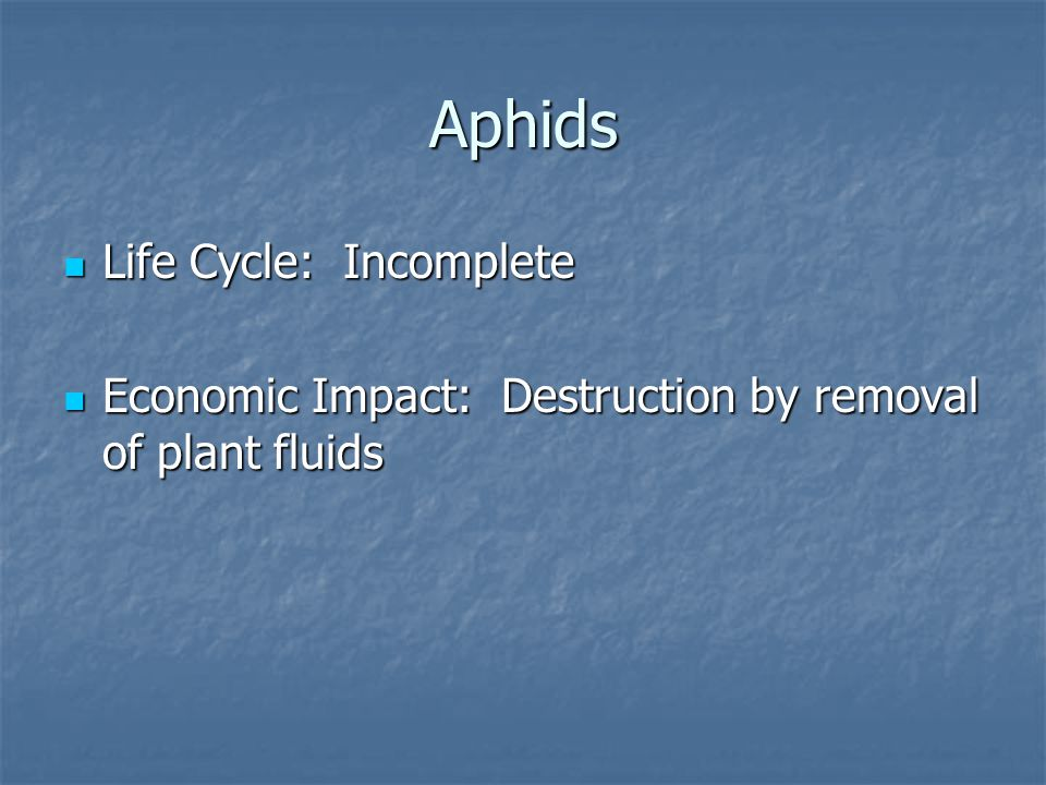 Aphids Life Cycle: Incomplete Life Cycle: Incomplete Economic Impact: Destruction by removal of plant fluids Economic Impact: Destruction by removal of plant fluids