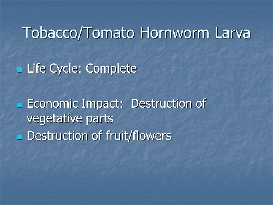 Life Cycle: Complete Life Cycle: Complete Economic Impact: Destruction of vegetative parts Economic Impact: Destruction of vegetative parts Destruction of fruit/flowers Destruction of fruit/flowers